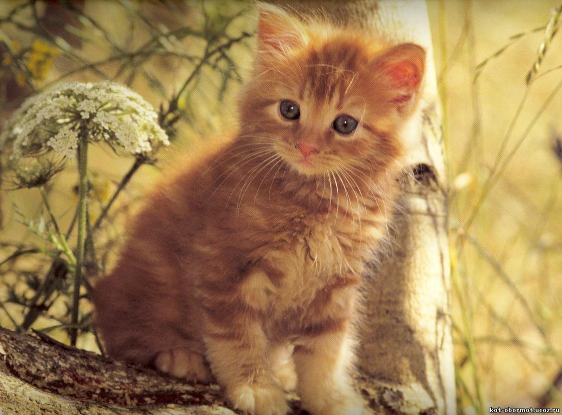 ВидКошка(котёнок) Особенная способностьУмеет вселятся в любое